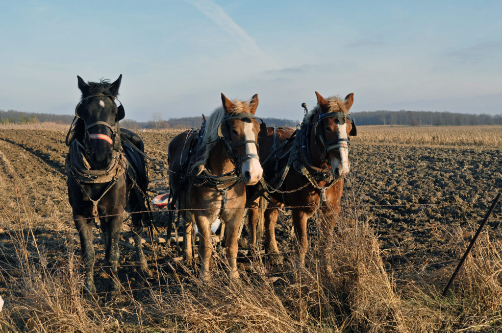 Friday Photos: Amish Scenes