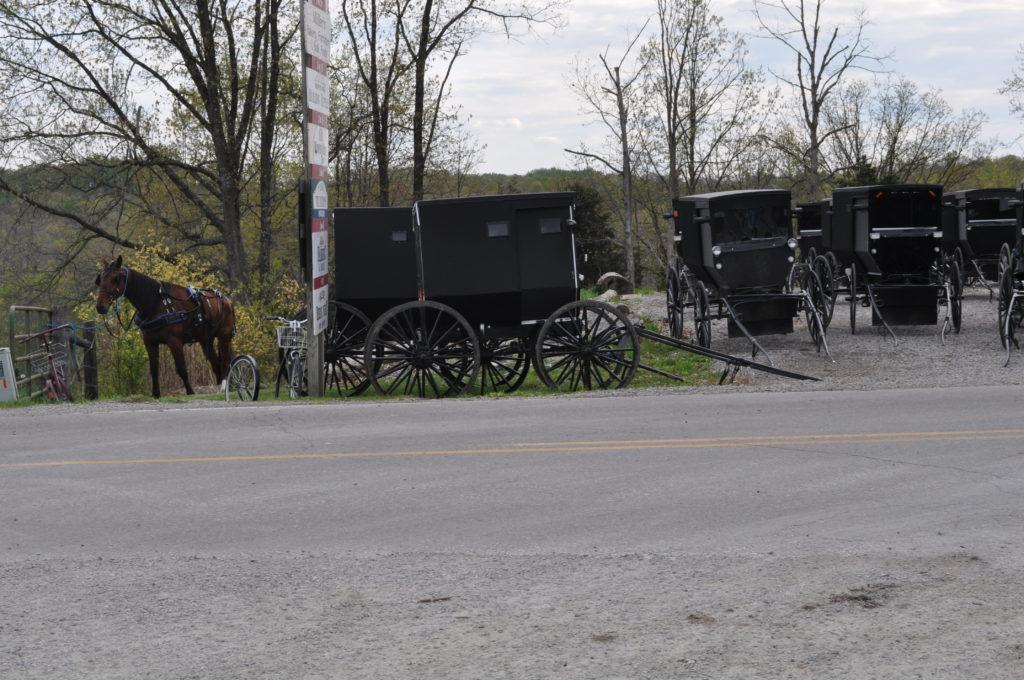 Auburn, Kentucky Horse Mess