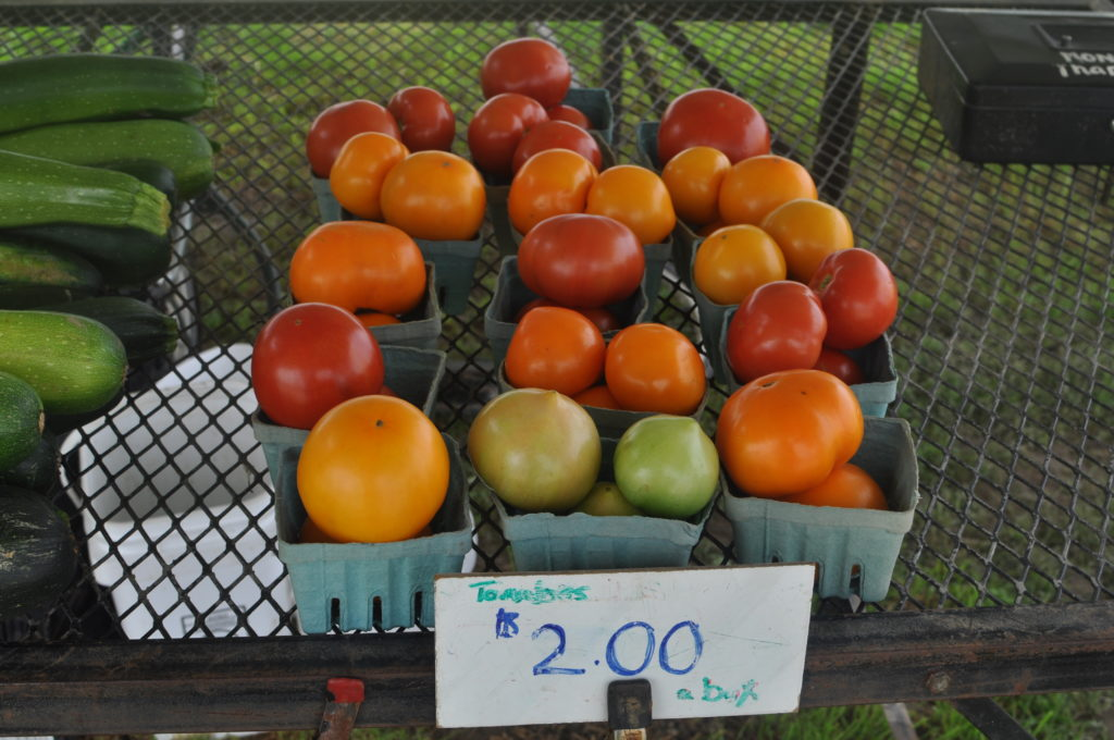 Beautiful freshly grown tomatoes at the Zook farm.