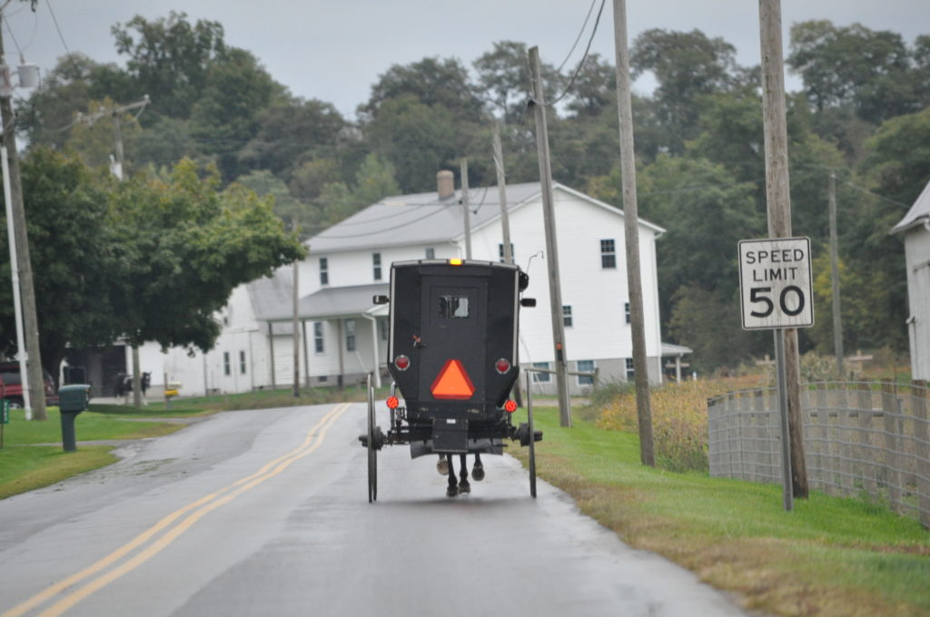Amish in the News:  Tragic Drowning, Court Rules Against the Amish, Wedge Salad, Millie, and More!