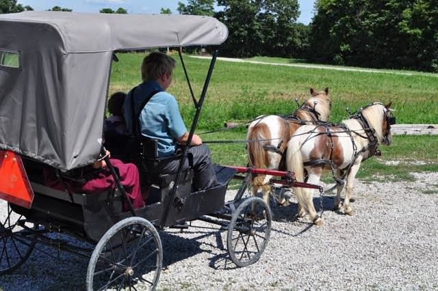 An Amish boy guiding a covered pony cart.