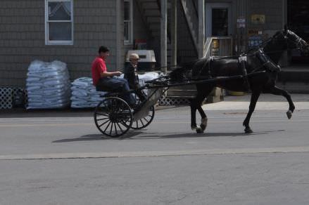 Buggies, Bikes, and Horses