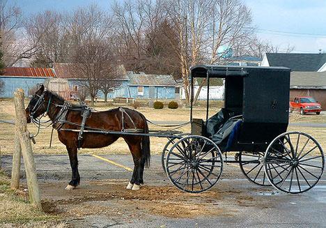 The Amish Cook: Gloria's Picnic Picks!