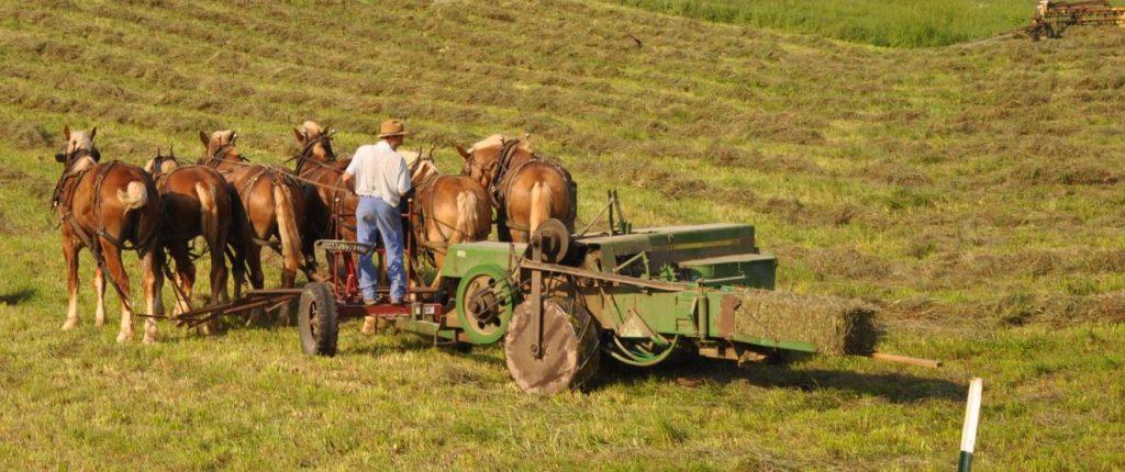 Amish in the News:   Amish Pasta Salad, Amazing Lasagna,  Gravel vs. Paved Road