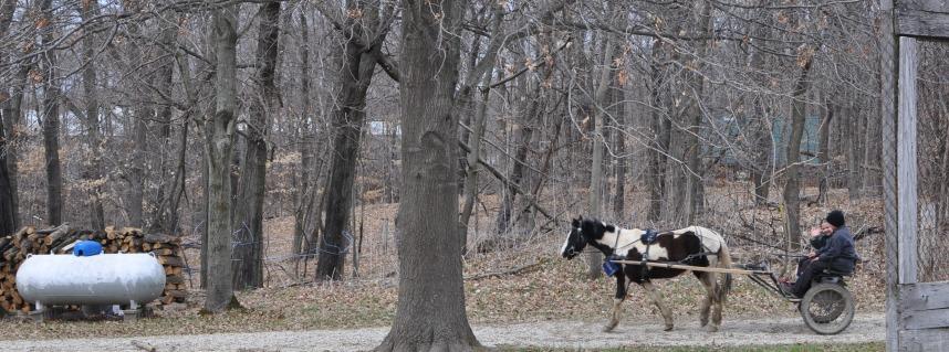 The Amish Cook: Grandma's Stuffing