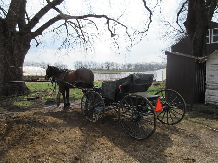 Amish in the News:  Amish Waffles,  King vs. Smucker,  Saving Amish Horses, and More!