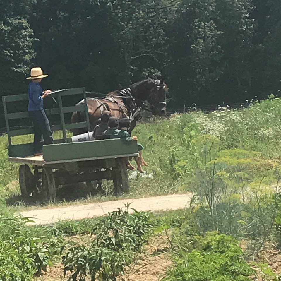 Amish in the News:  Burglars in Amish Country,  Millie's Homemade Veggie Juice, Horsing Around, and More!